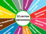 Системы человеческого организма