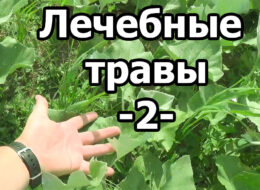 Лечебные травы ч.2 Аптечная грядка. Дикая, но симпАтиШная