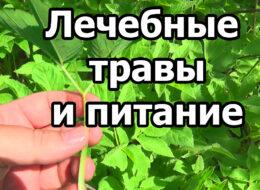 Лечебные травы и питание. Выдержка из стрима 06.05.21