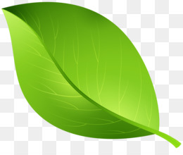 green-leaf-transparent-png-clip-art-image-5a3bbf4396c848.9033360615138650276176