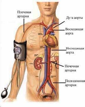 повышение холестерина в крови причины и лечение