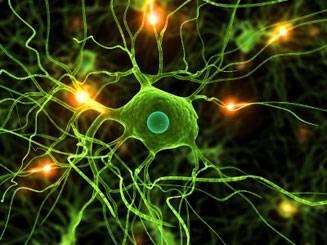 Духом и волей обладает каждая клетка в организме человека.