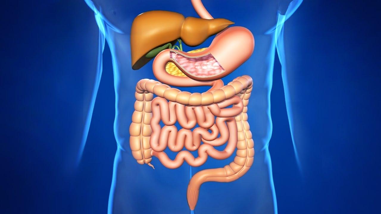 Схема взаимосвязь органов и систем органов фото 526
