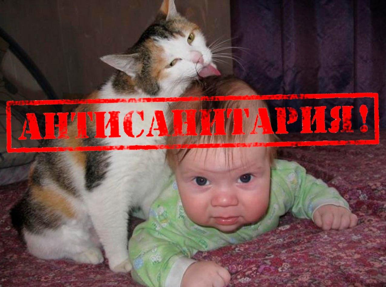 Смешные картинки котов с 20